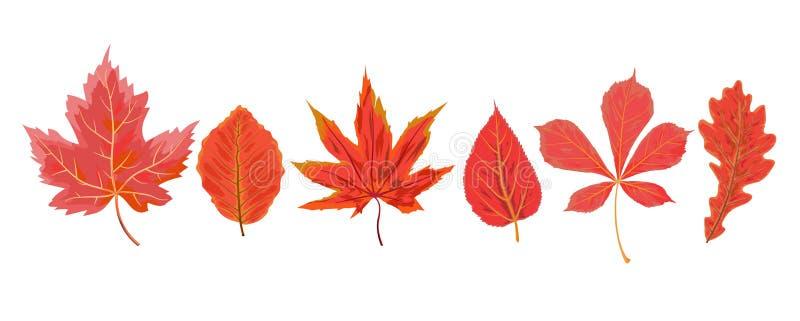 Wektorowego jesieni akwareli stylu sezonowego spadku klonowy czereśniowy chestn ilustracji