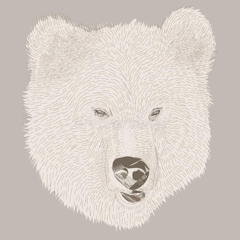 Wektorowego markiera pociągany ręcznie lasowi zwierzęta: niedźwiedź ilustracja wektor