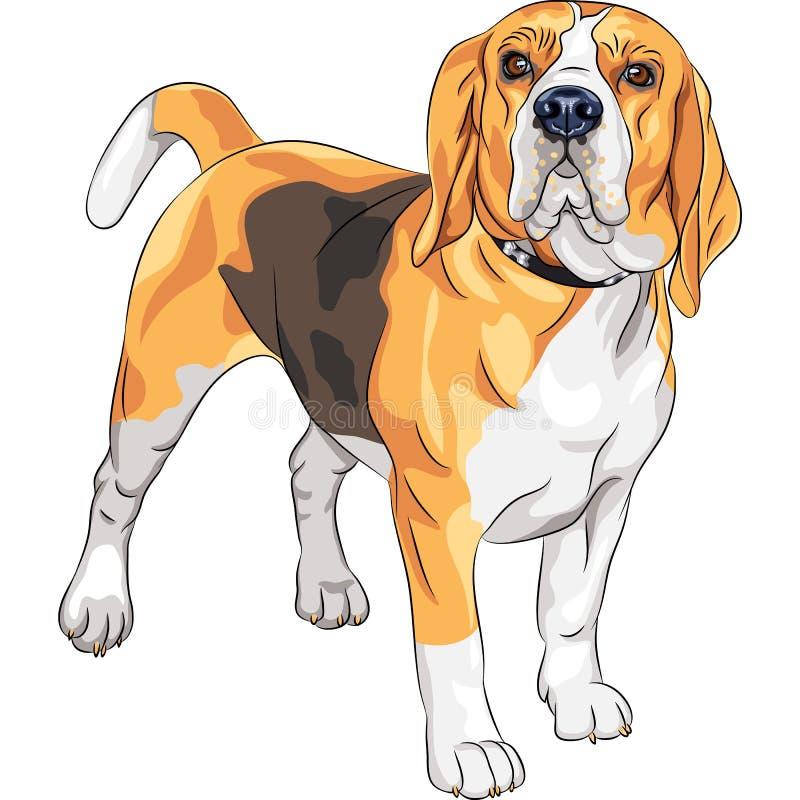 Wektorowego nakreślenia Beagle poważny psi traken royalty ilustracja