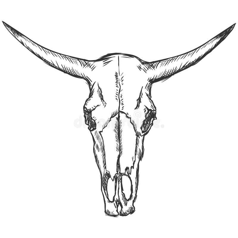 Wektorowego nakreślenia krowy stara czaszka royalty ilustracja