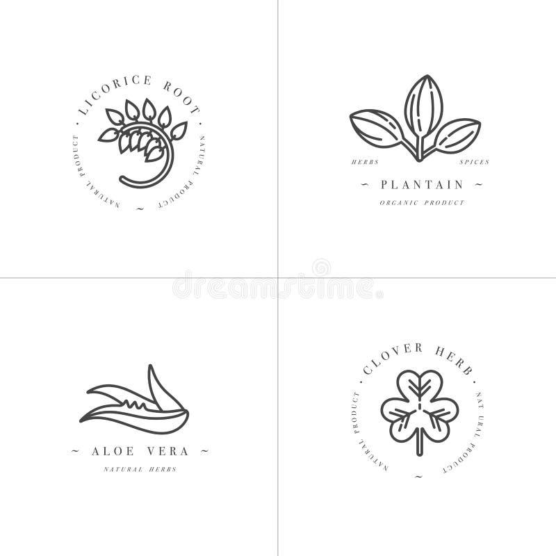 Wektorowego onochrome projekta ustaleni szablony i emblematy - zdrowi ziele i pikantność Różne lecznicze, kosmetyczne rośliny, royalty ilustracja