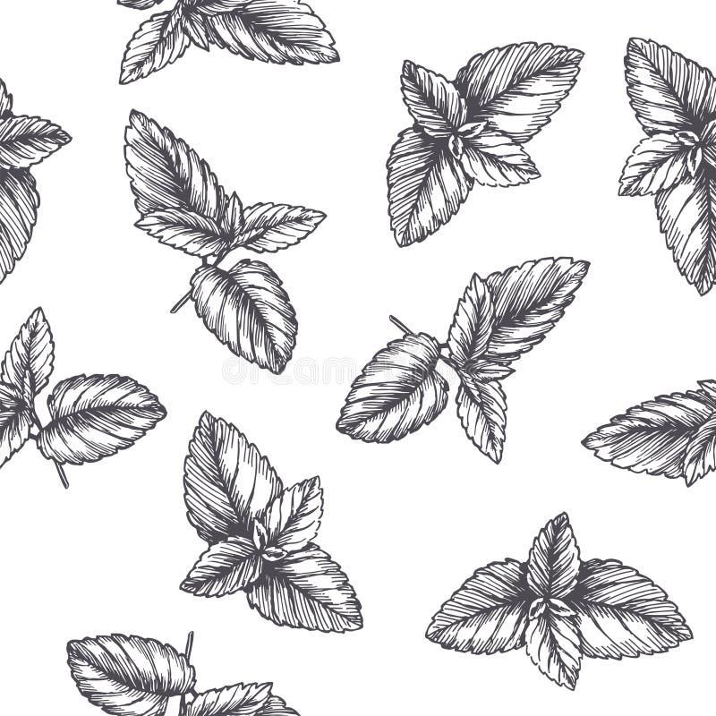 Wektorowego rocznika bezszwowy wzór z nowymi liśćmi w rytownictwo stylu Ręka rysująca botaniczna tekstura z miętówek poradami odi ilustracji
