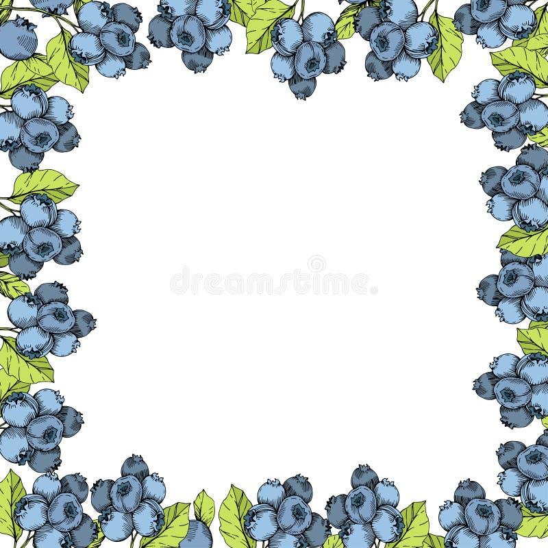 Wektorowej czarnej jagody błękitna i zielona grawerująca atrament sztuka Jagody i zieleń liście Ramowy rabatowy ornamentu kwadrat royalty ilustracja
