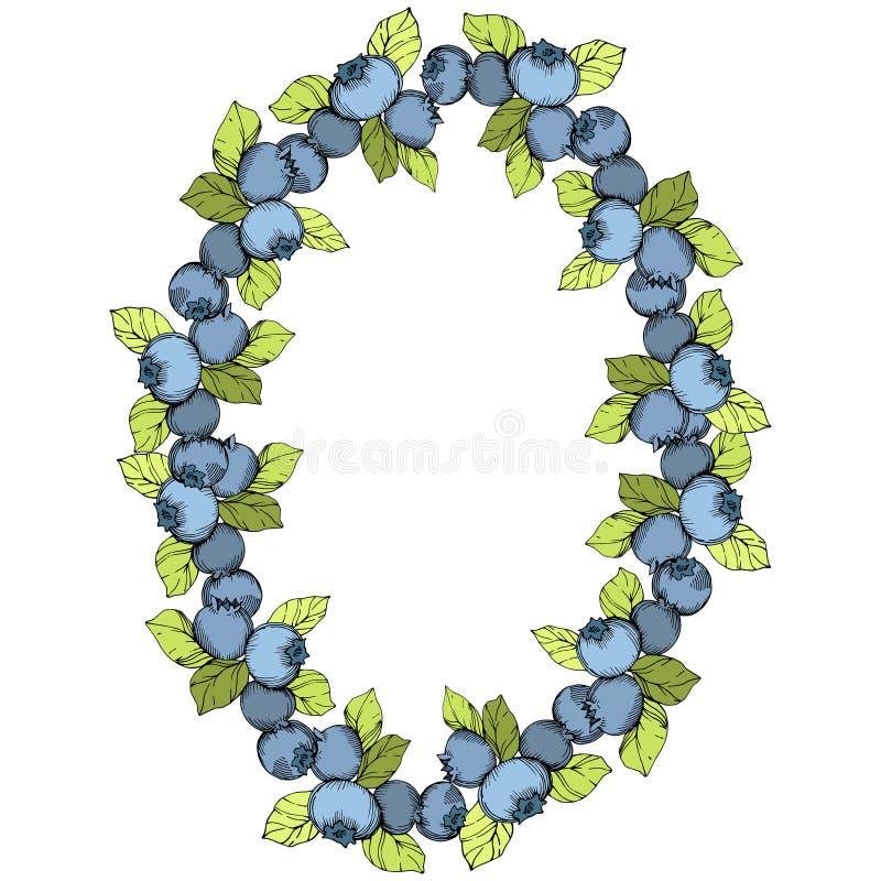 Wektorowej czarnej jagody błękitna i zielona grawerująca atrament sztuka Jagody i zieleń liście Ramowy rabatowy ornamentu kwadrat ilustracji