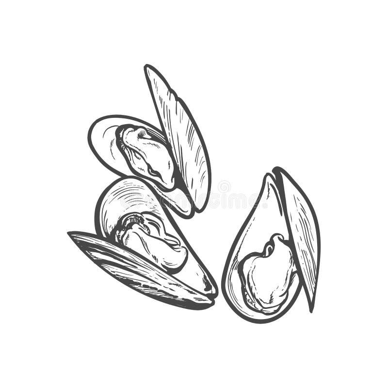 Wektorowej nakreślenie kreskówki denny mussel odizolowywający royalty ilustracja
