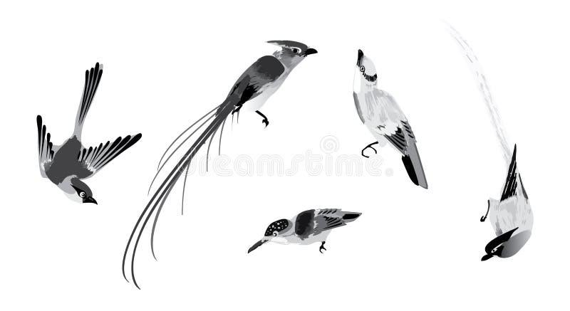 Wektorowi atramentu stylu ptaki ilustracji