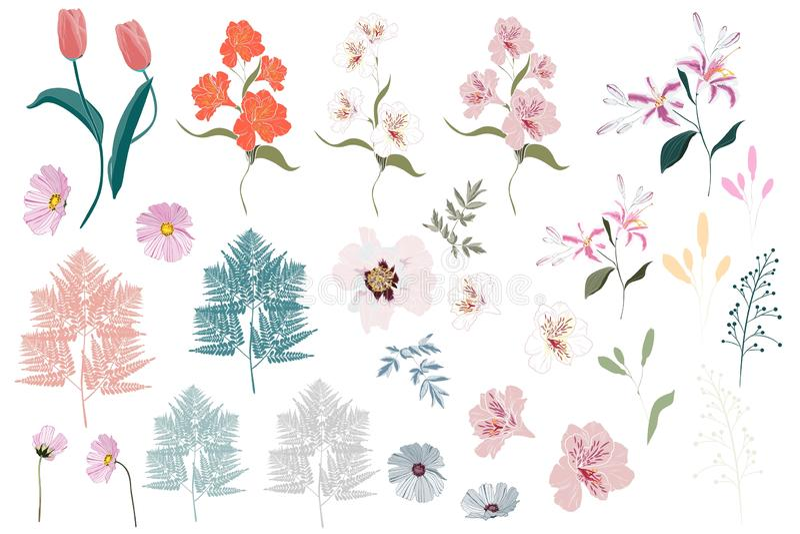 Wektorowi Duzi Ustaleni botaniczni elementy - wildflowers, ziele, liść kolekci ogrodowy i dziki ulistnienie, kwiaty, ilustracji