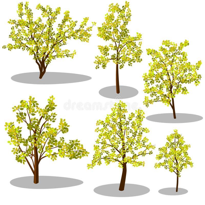 Wektorowi isometric drzewa i dekoracyjni krzaki ilustracji