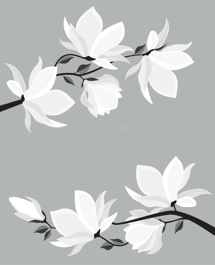 Wektorowi magnolia kwiaty ilustracji