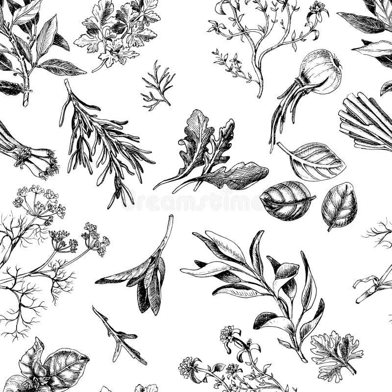 Wektorowi tła nakreślenia ziele Ziele - Podpalany liść, koper, macierzanka, mędrzec, rozmaryn, basil, pietruszka, arugula ilustracji