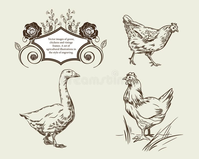 Wektorowi wizerunki gąska, kurczaki i rocznik ramy, royalty ilustracja