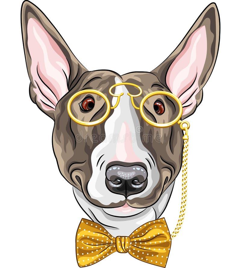Wektorowy śmieszny kreskówka modnisia psa Bullterrier royalty ilustracja