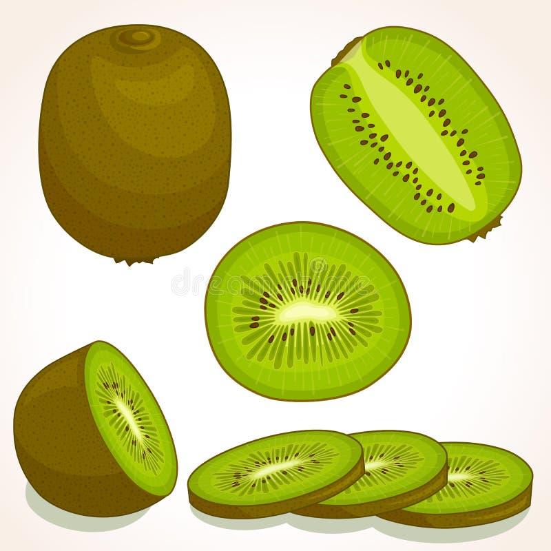 Wektorowy świeży kiwi Pokrojony, cały, przyrodni kiwifruit, ilustracji