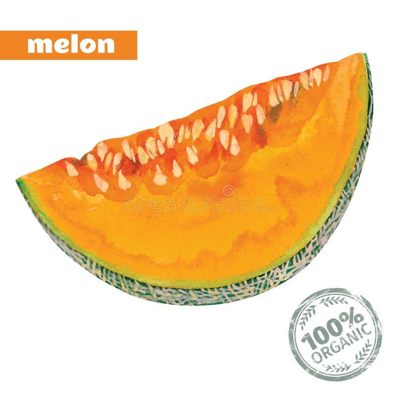 Wektorowy akwarela melon ilustracji