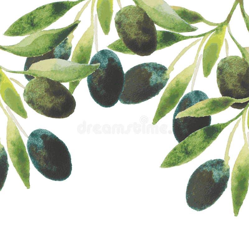 Wektorowy akwareli oliwa z oliwek rozgałęzia się tło royalty ilustracja
