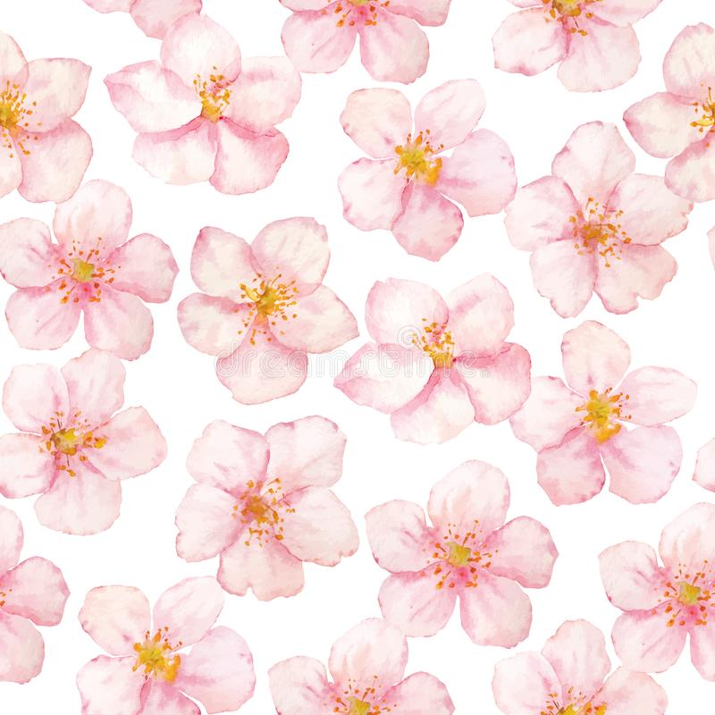 Wektorowy akwareli Sakura kwiat?w wz?r na bia?ym tle Inkasowi Sakura kwiaty ilustracja wektor