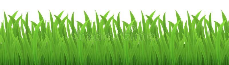 Wektorowy bezszwowy wizerunek odizolowywający na bielu zielona trawa royalty ilustracja