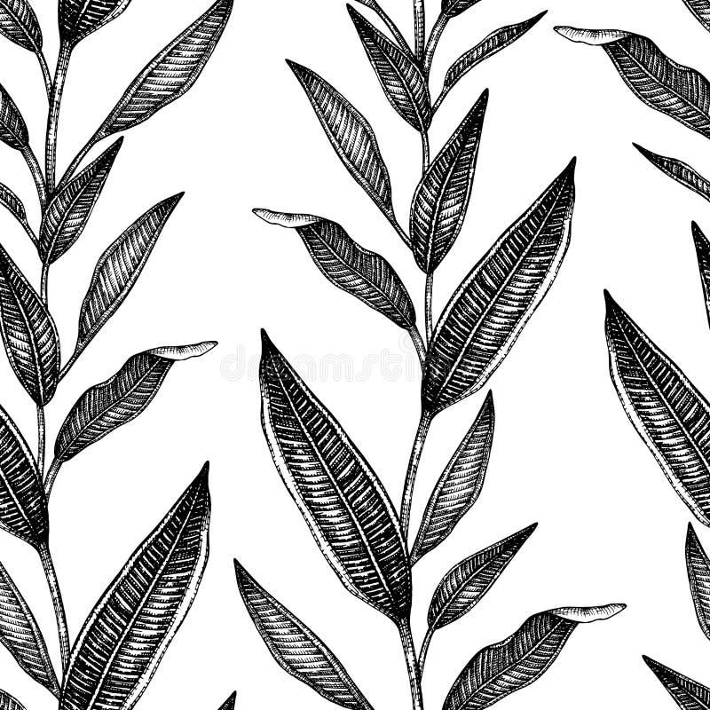 Wektorowy bezszwowy wzór tropikalni liście odizolowywający na białym tle ilustracja wektor
