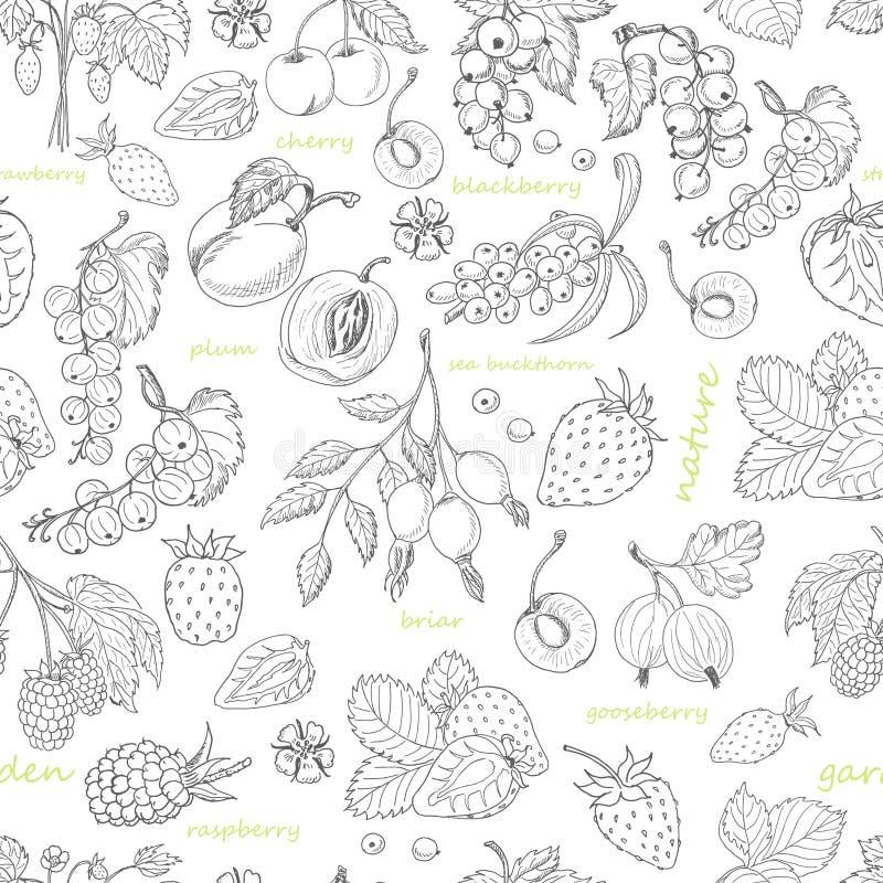 Wektorowy bezszwowy wzór z jagodami na białym tle royalty ilustracja