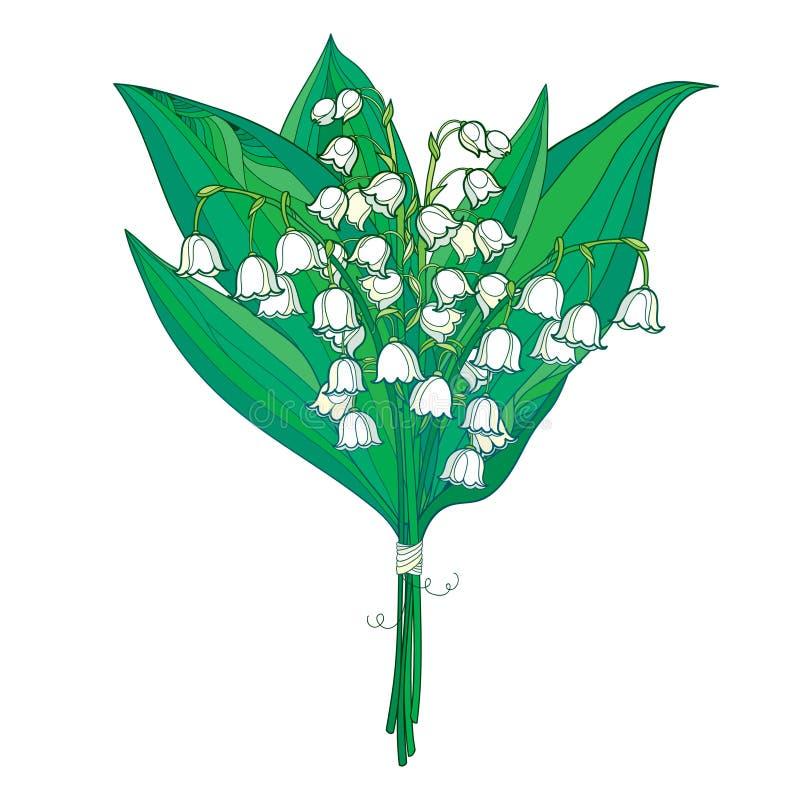 Wektorowy bukiet z kontur białą lelują dolina, Convallaria zieleń lub kwiaty i opuszcza odosobniony na bielu ilustracji