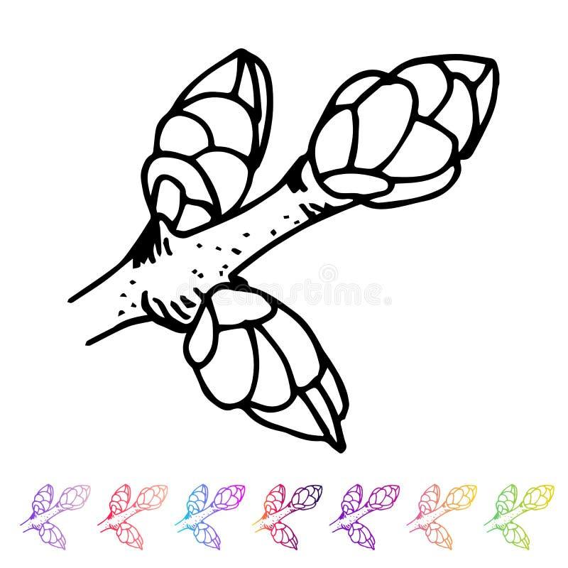 Wektorowy cynaderki pączka czerni wzór w roślina projekcie Ręki malować wiosna ogródu flory Czarny sletch na whie royalty ilustracja