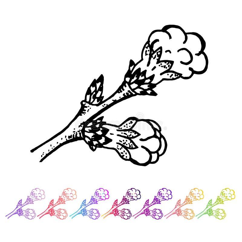 Wektorowy cynaderki pączka czerni wzór w roślina projekcie Ręki malować wiosna ogródu flory Czarny sletch odizolowywający na whie ilustracja wektor