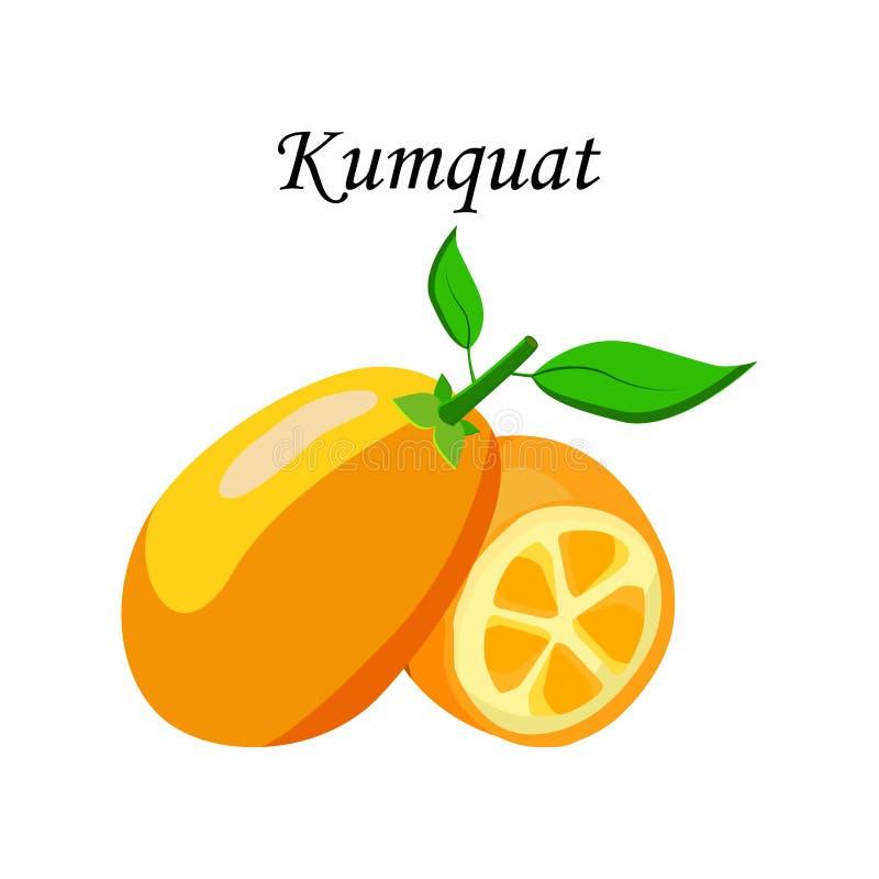 Wektorowy ilustracyjny logo dla całego dojrzałego owocowego kumquat, zielony trzonu liść, rżnięta połówka, pokrojony cumquat, tło ilustracja wektor