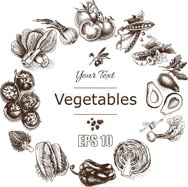 Wektorowy ilustracyjny nakreślenie warzywa Pomidor, grochy, brokuły, asparagus, karczoch, kapusta, oberżyna, avocado, arugula, ba ilustracja wektor