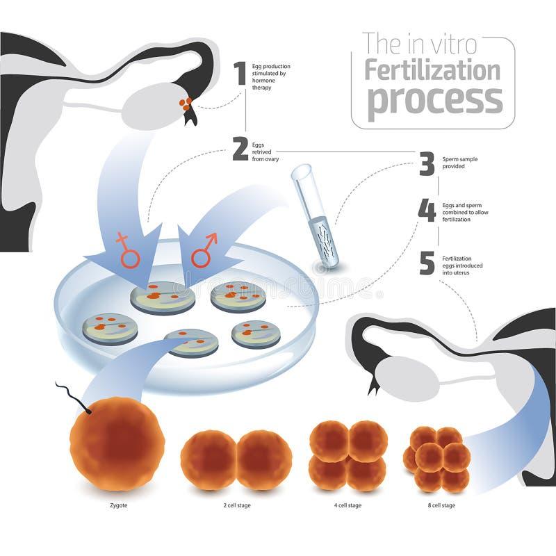 Wektorowy ilustracyjny pojęcie nawożenie in vitro Kolorowy na białym tle ilustracji