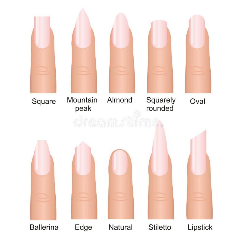Wektorowy ilustracyjny ustawiający różni gwoździe kształtuje tipes Robi manikiur projekt na palcach odizolowywających na białym t ilustracja wektor