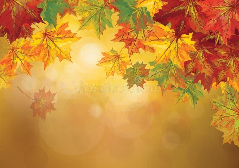 Wektorowy jesienny liścia tło royalty ilustracja