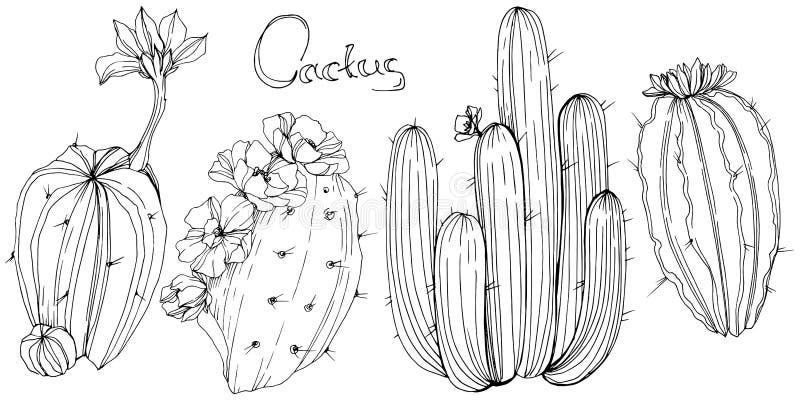 Wektorowy kaktus Kwiecisty botaniczny kwiat Czarny i biały grawerująca atrament sztuka Odosobniony kaktus ilustracji element ilustracja wektor