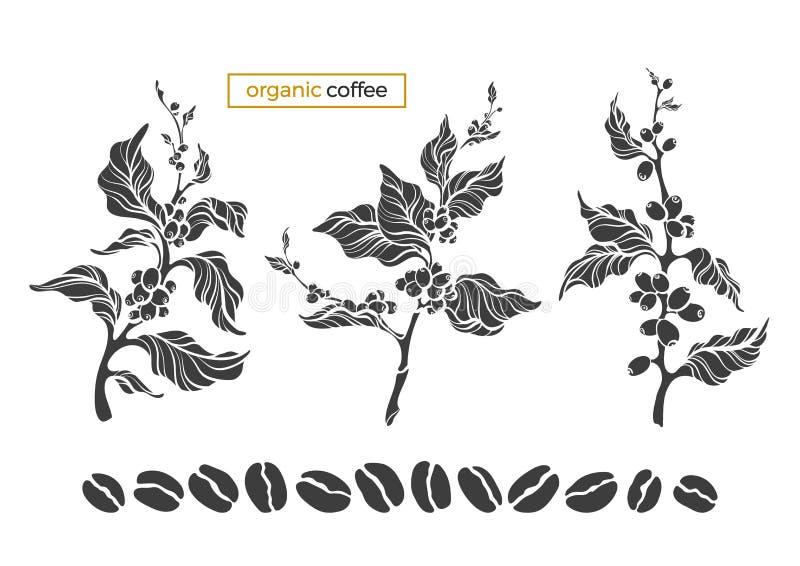 Wektorowy kawowy ustawiający drzewo, gałąź, liście, fasole ilustracji