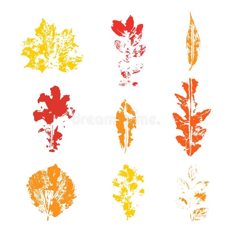 Wektorowy kolorowy set jesień liście odizolowywający na białym tle ilustracji