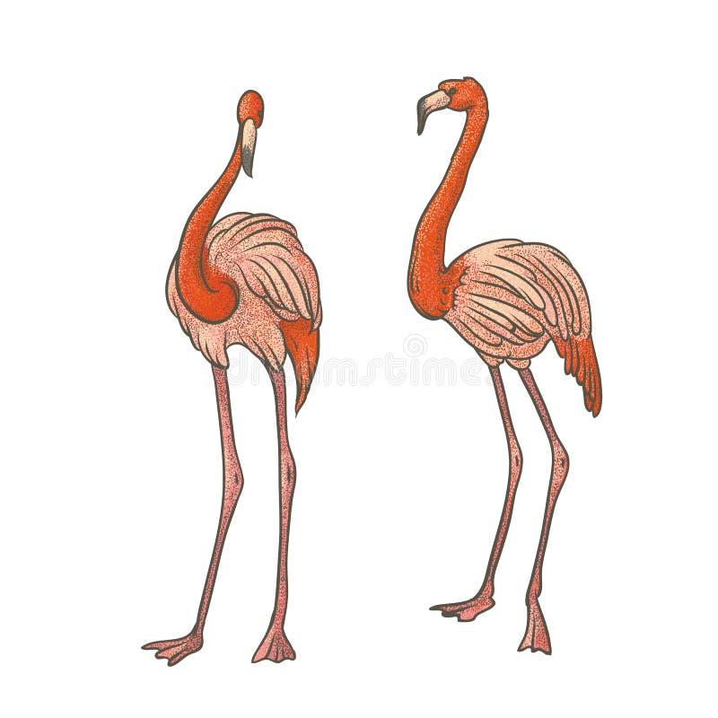 Wektorowy kolorowy textured nakreślenie rysujący ręką dwa różowego longshanks flaminga na białym tle Jaskrawy egzotyczny tropikal royalty ilustracja