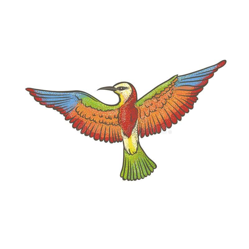 Wektorowy kolorowy textured nakreślenie rysujący ręką Europejski zjadacz na białym tle Jaskrawy egzotyczny ptak migrujący odosobn ilustracja wektor