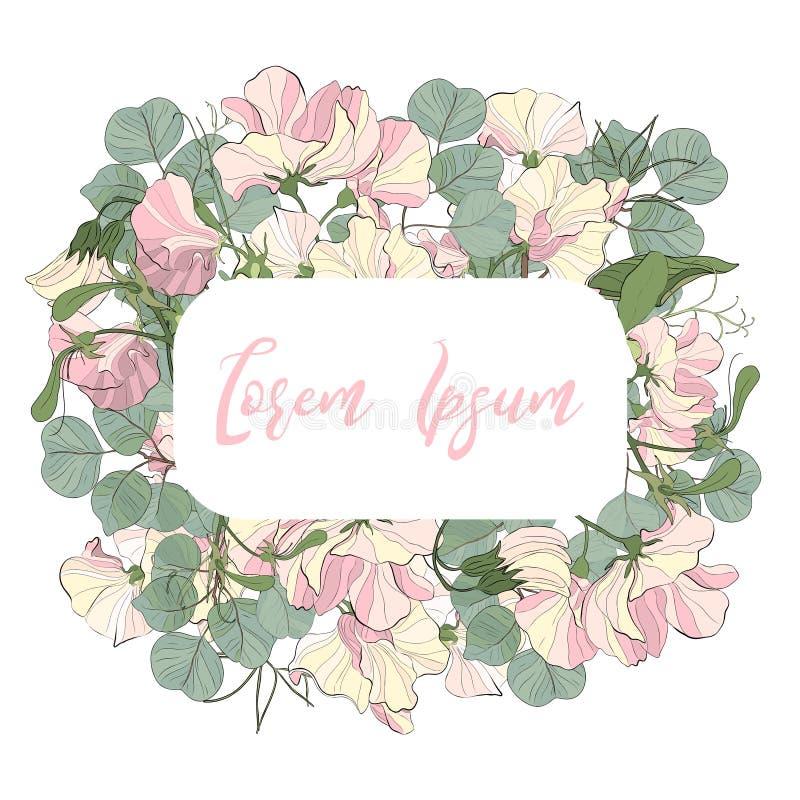 Wektorowy kwiecistego projekta karty zaproszenie: kwiecisty ogrodowych menchii słodkiego grochu kwiat i zieleń eukaliptusowy dola zdjęcie stock