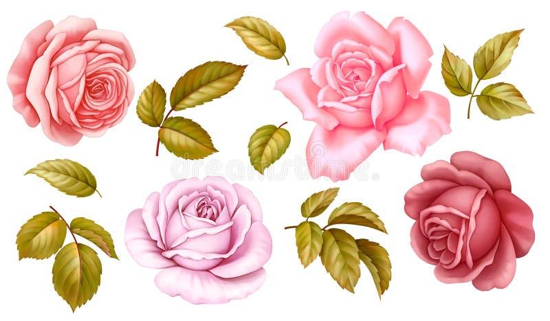 Wektorowy kwiecisty set różowy czerwony błękitny biały rocznik wzrastał kwiatów zielonych złotych liście odizolowywających na bia ilustracji