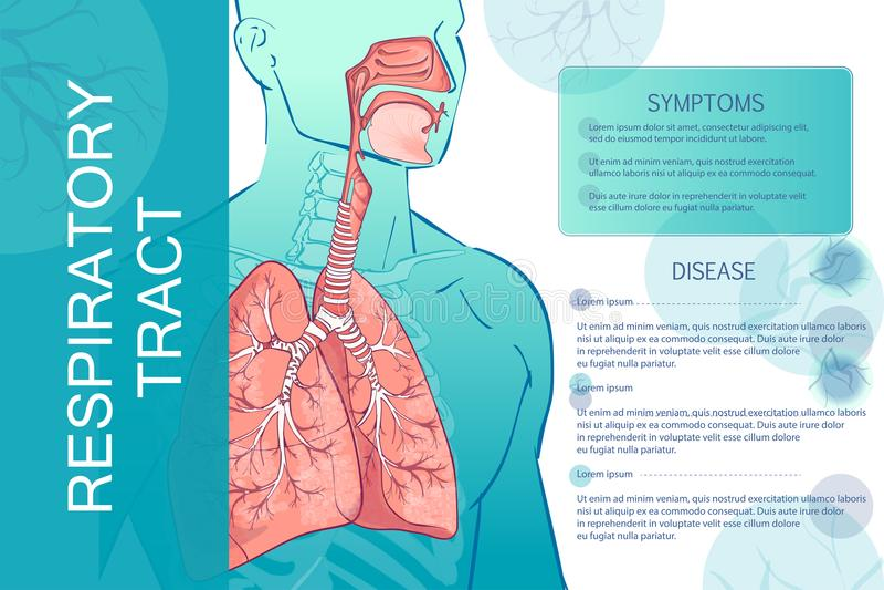 Wektorowy ludzki Oddechowy system ilustracja wektor