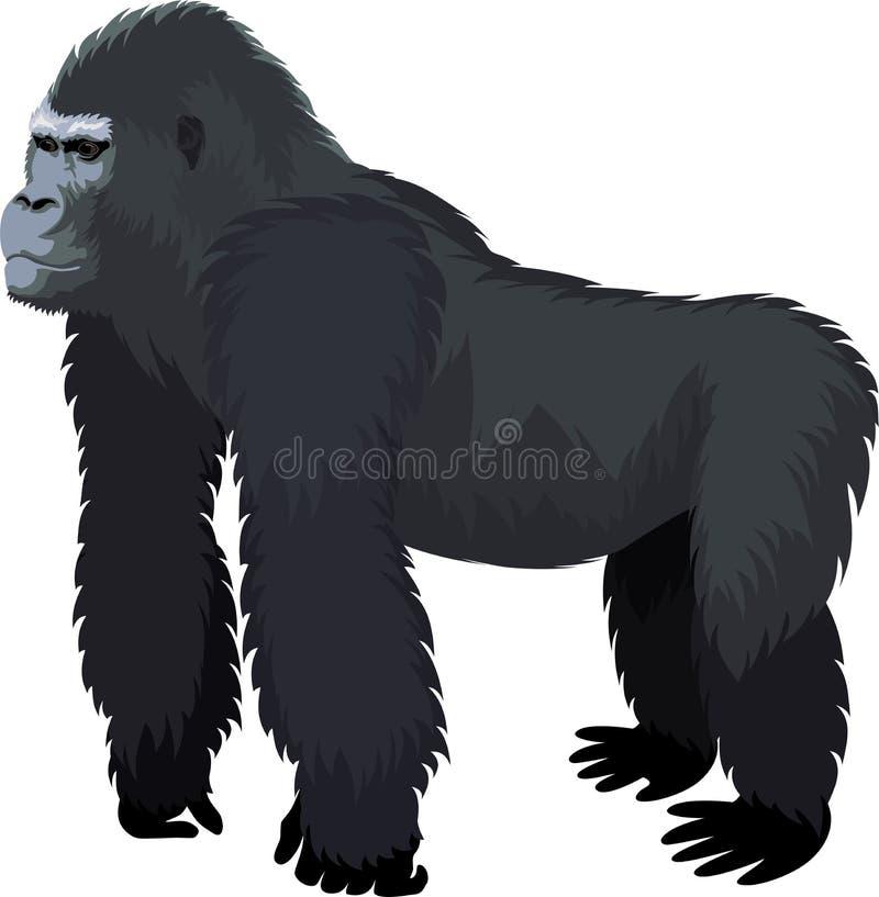 Wektorowy męski goryl royalty ilustracja