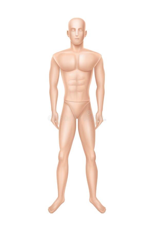 Wektorowy męski mannequin, manikin dla sklepu odzieżowego ilustracji