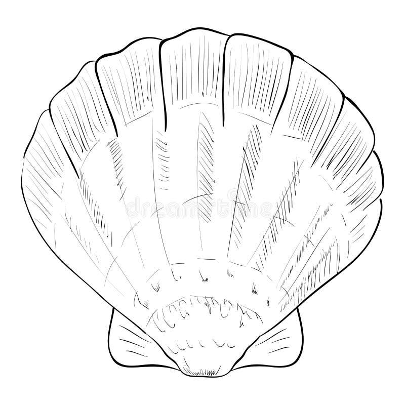 Wektorowy nakreślenie fan skorupa ilustracja wektor