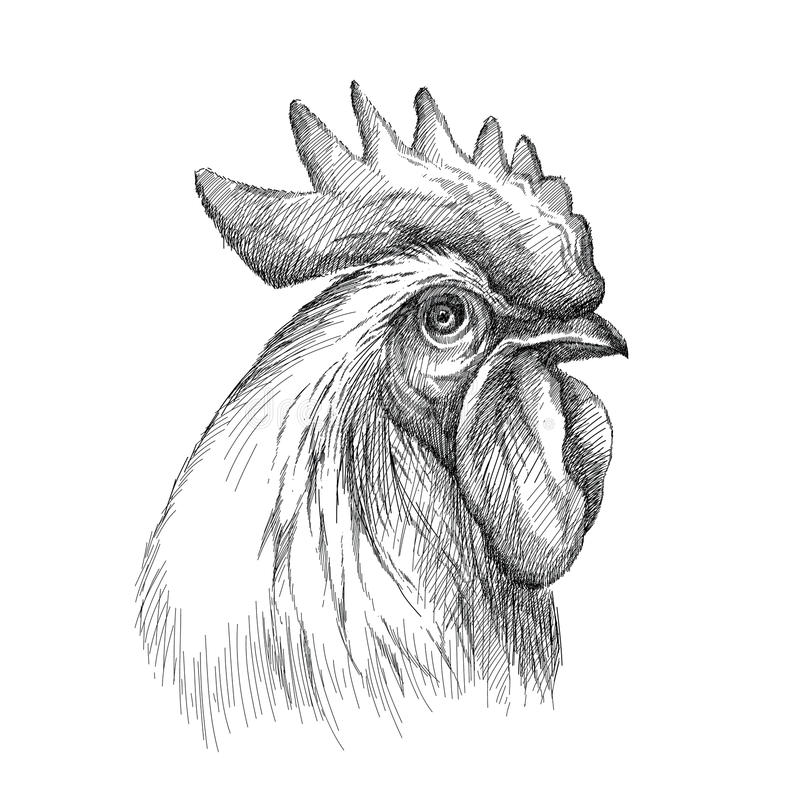 Wektorowy nakreślenie koguta lub koguta głowy profil w czerni odizolowywającym na białym tle Sylwetka kogut głowa w grafika stylu ilustracji