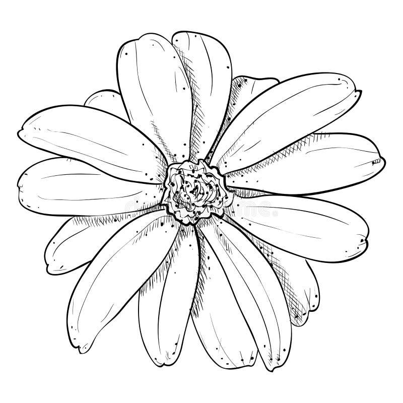 Wektorowy nakreślenie kwiat royalty ilustracja