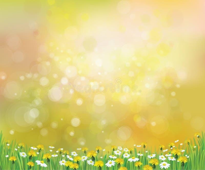 Wektorowy natury wiosny tło z chamomiles royalty ilustracja
