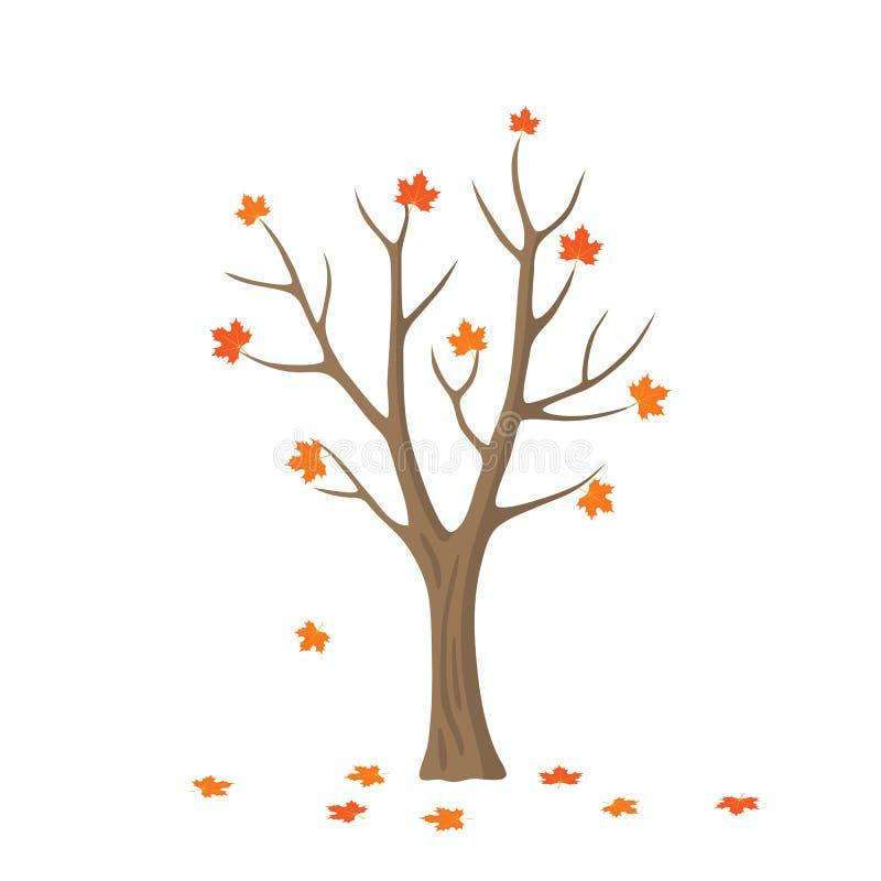 Wektorowy płaski klonowy drzewo royalty ilustracja
