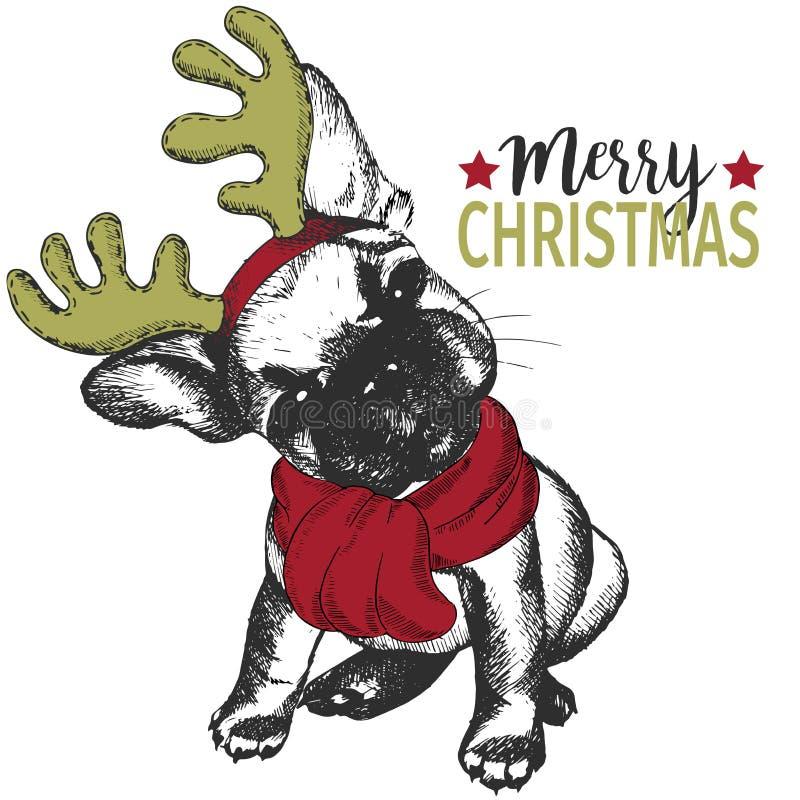 Wektorowy portret boże narodzenie pies Francuskiego buldoga rogu psi jest ubranym jeleni obręcz i szalik Bożenarodzeniowy plakat, ilustracja wektor