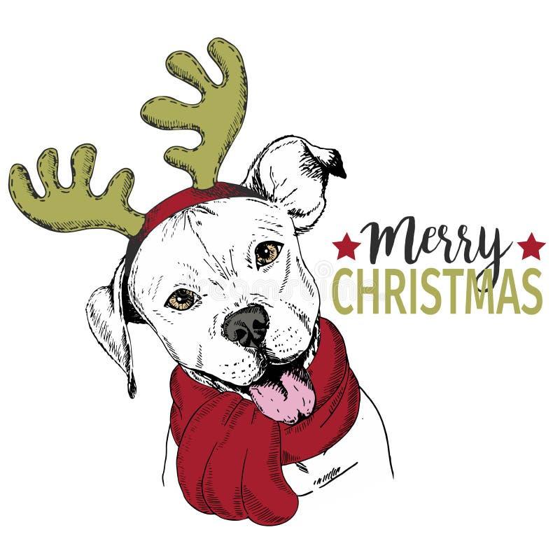 Wektorowy portret boże narodzenie pies Pit bull rogu psi jest ubranym jeleni obręcz i szalik Bożenarodzeniowy plakat, dekoracja zdjęcia stock