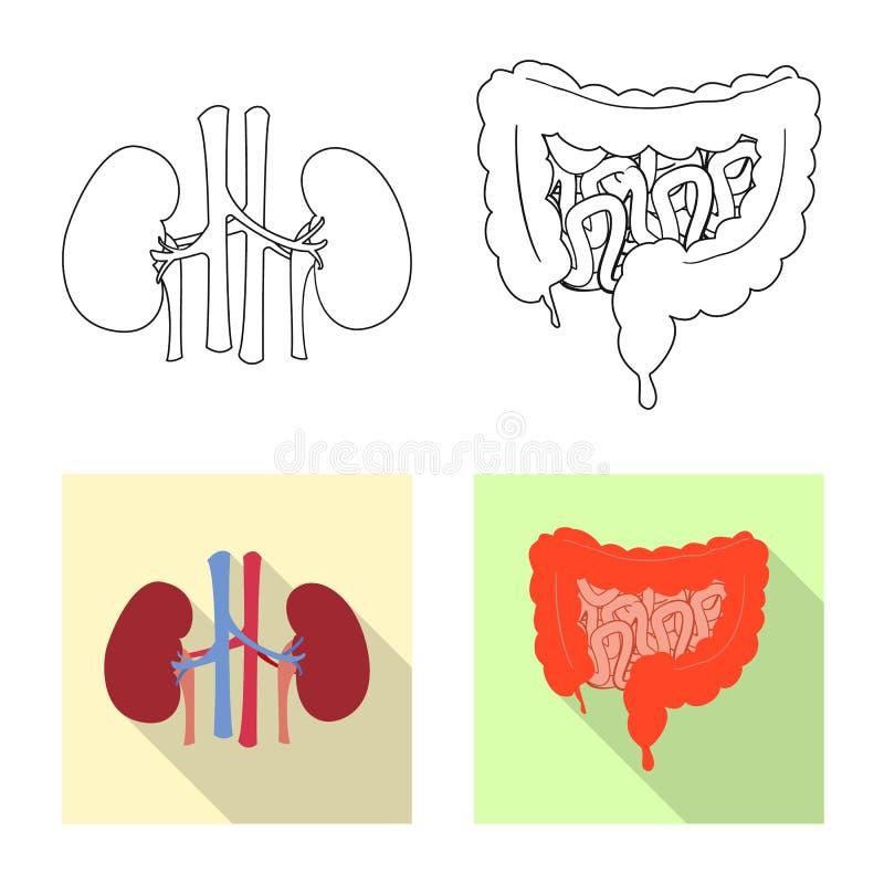 Wektorowy projekt ciała i istoty ludzkiej ikona Kolekcja ciało i medyczny akcyjny symbol dla sieci ilustracji