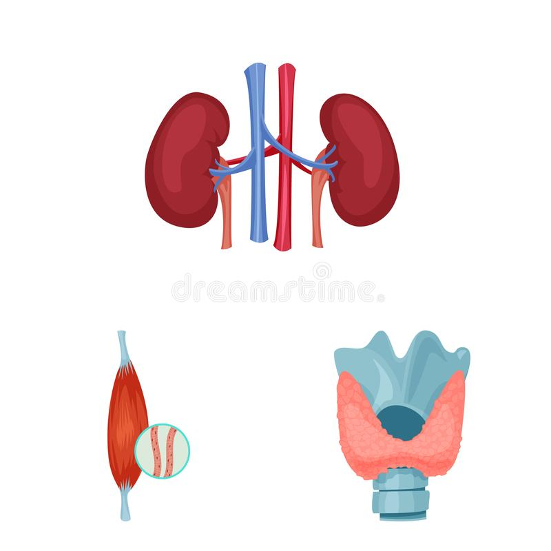 Wektorowy projekt ciała i istoty ludzkiej ikona Kolekcja ciało i medyczny akcyjny symbol dla sieci royalty ilustracja